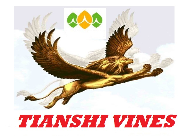 http://www.pakpositions.com/company/tainshi-international